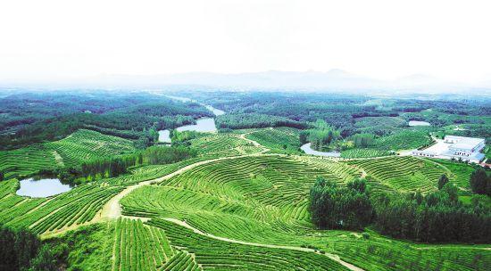 香菇、茶叶、中药材 随州三大农产品出口居全省前列
