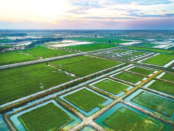 虾稻共作标准化生态种养基地